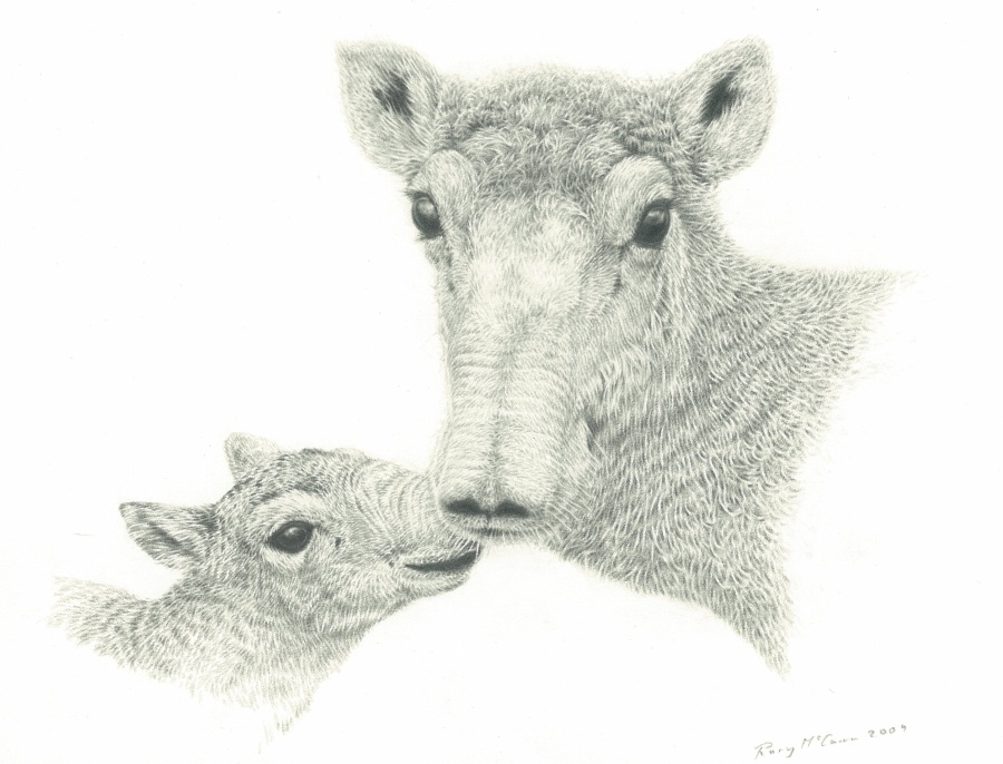 Animals300dpi
