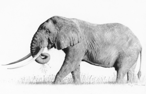 RoryElephantPencil