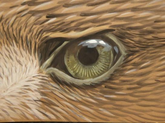 Eagle eye workshop option