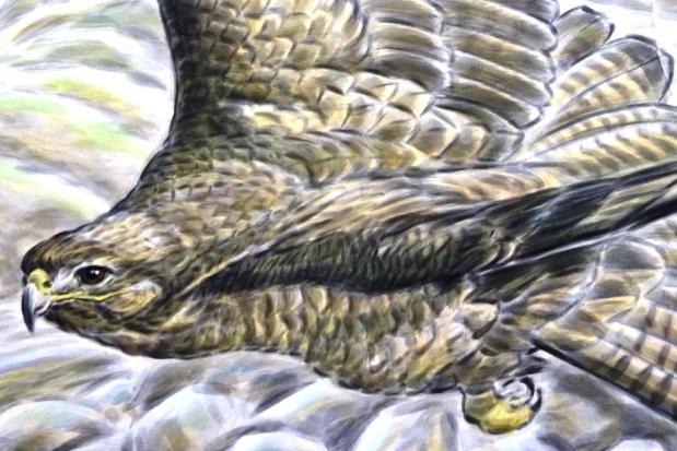 Rory McCann hand painted mural wildlife art school painting (33)