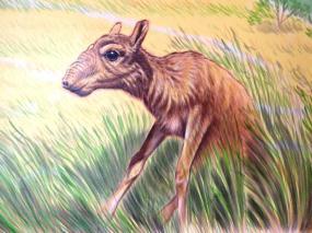 Rory McCann hand painted mural wildlife art school painting (51)