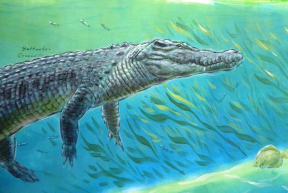 Rory McCann hand painted mural wildlife art school painting (60)